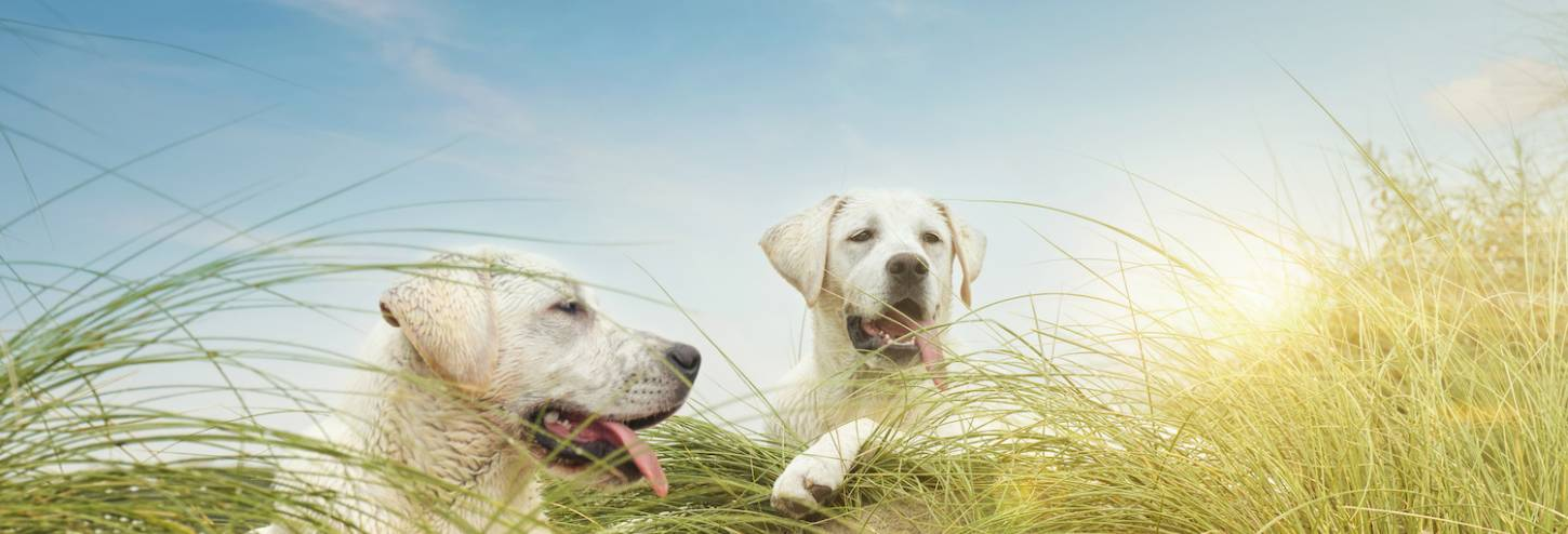 Hilton Head Pet Friendly Rentals